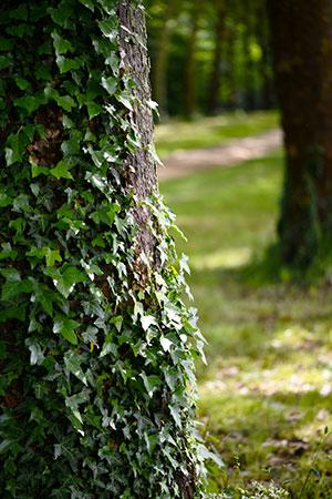 Conseil arboricole à distance : comprendre l'arbre !