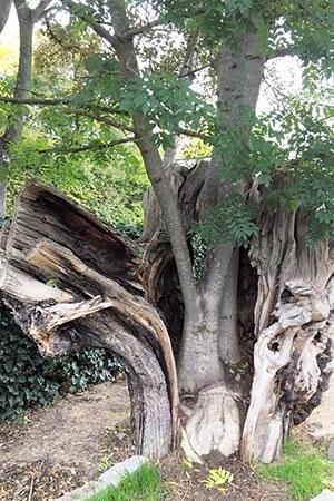 Conseil arboricole en ligne : comprendre l'arbre !